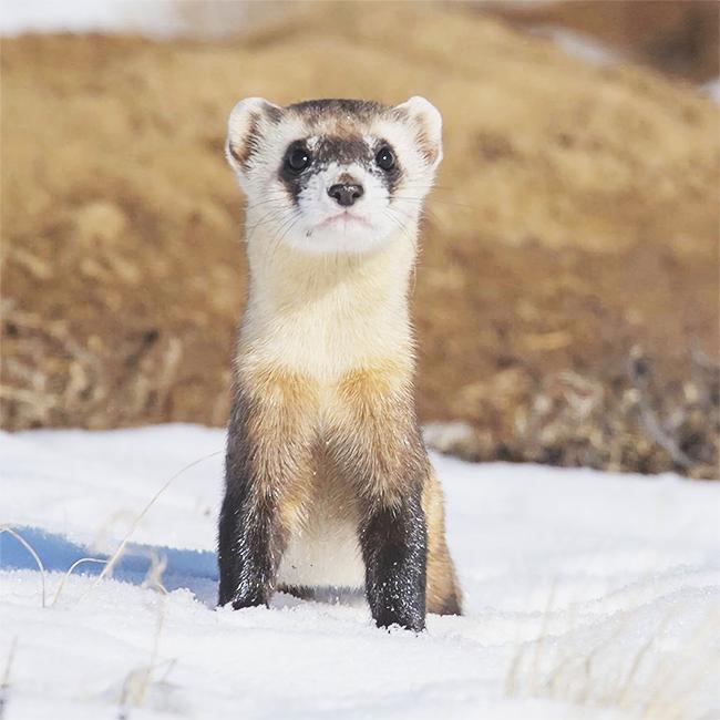 Especialistas en pequeños mamíferos en Vinaròs
