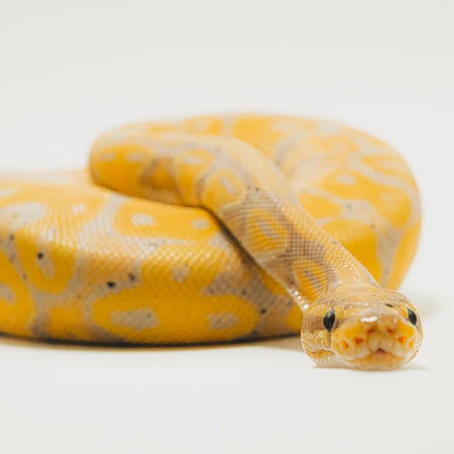 Especialistas en reptiles y anfibios en Vinaròs